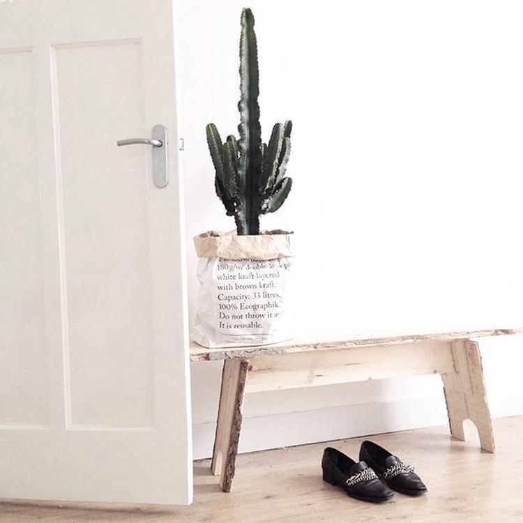 Persoonallisia kaktusinspiraatioita sisustukseen