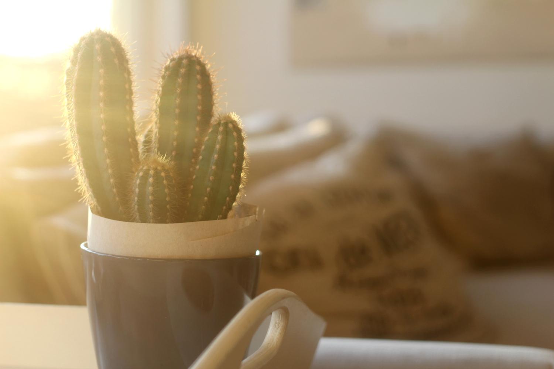 Kaktusvillitys jatkuu