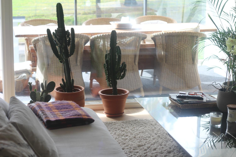 Isojen kaktusten hoito-ohje