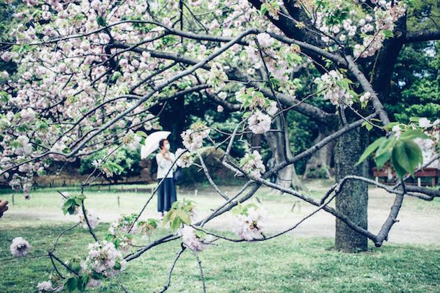 cherry-blossom-trees-tokyo-1