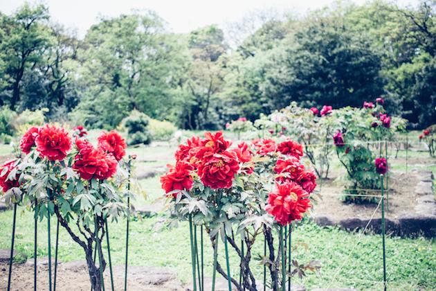 tokyo-garden-3