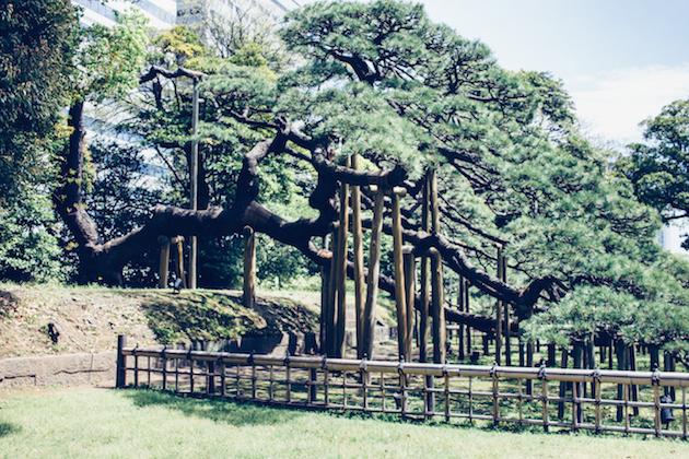 tokyo-gardens-1