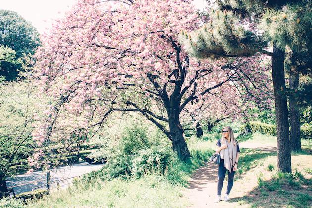 tokyo-sakura-april-2