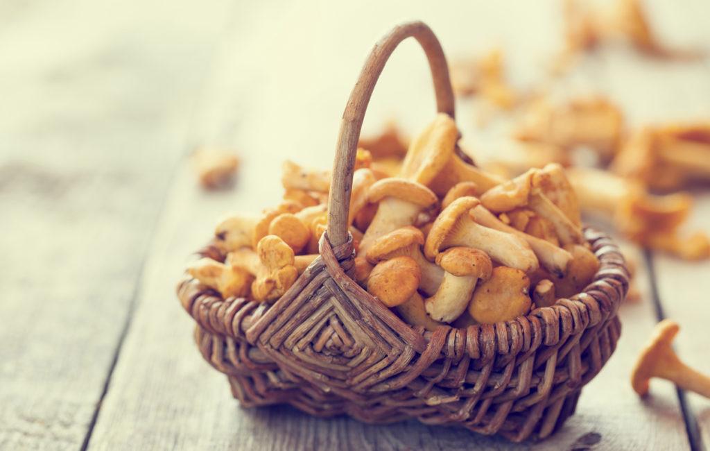 Kantarelli on herkullinen sieni. Siinä on A- ja D-vitamiinia sekä seleeniä, ja vain vähän kaloreita.
