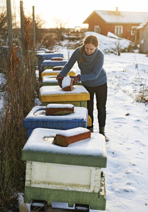 Österåkerit tuottavat hunajaa myös myyntiin. Nyt mehiläiset ovat vielä talvihorroksessa.