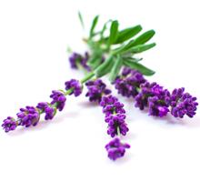 kukkahoroskooppi: laventeli