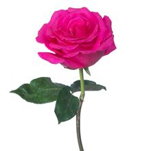 kukkahoroskooppi: ruusu