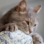 Vaikka kissasi ei olisikaan sylikissa, se voi silti rakastaa sinua syvästi.