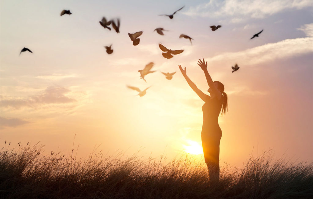 Linnut ymmärtävät elämästä paljon sellaista, mistä meidän ihmisten kannattaisi ottaa oppia.