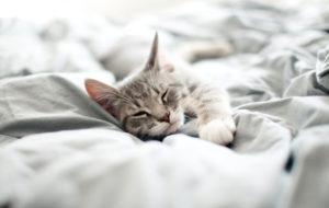 Kissahoroskooppi – tällainen kissasi on horoskooppimerkkinsä mukaan