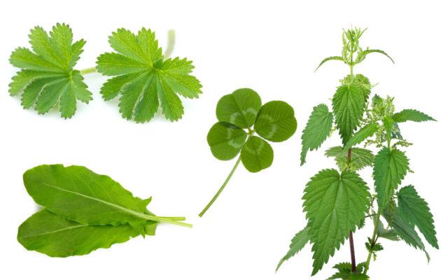 Luonnonkasvit, joita voit kerätä ja syödä