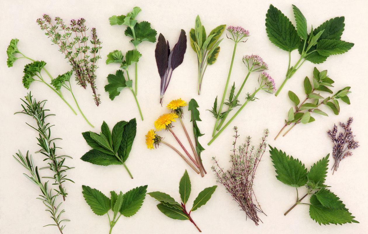 Kasvit, joita voit kerätä luonnosta.