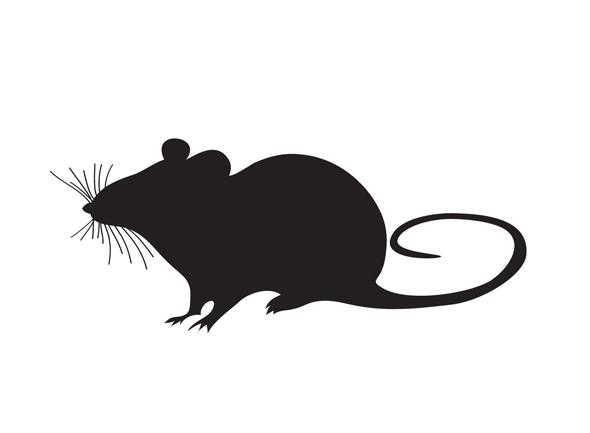 Kiinalainen horoskooppi rotta